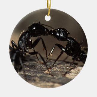 el besarse de las hormigas ornamente de reyes