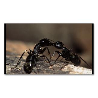 el besarse de las hormigas tarjetas de visita magnéticas (paquete de 25)