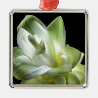 el beso blanco del amor de los flores de la flor adorno cuadrado plateado