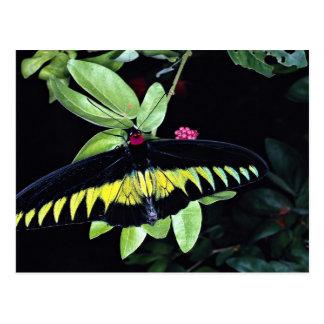 El birdwing masculino de Rajah Brooke, Malasia Postal