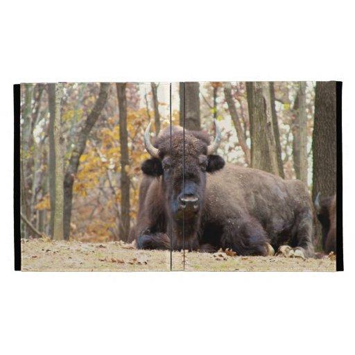 El bisonte americano en caída colorea la foto del