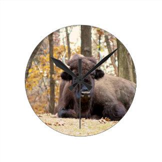 El bisonte americano en caída colorea la foto del  relojes