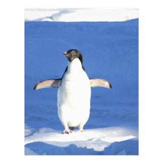 El blanco del negro de las plumas de pájaro del pi