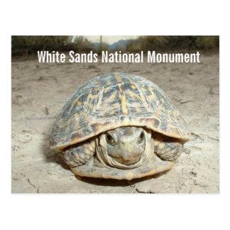 El blanco enarena la tortuga de caja