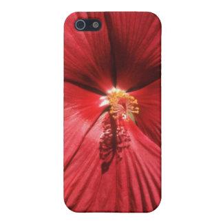 El blanco estriado sombrea las flores iPhone 5 fundas