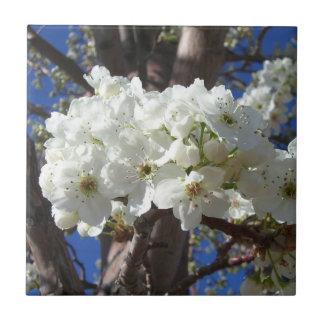 El blanco florece árbol floreciente de la azulejo cuadrado pequeño