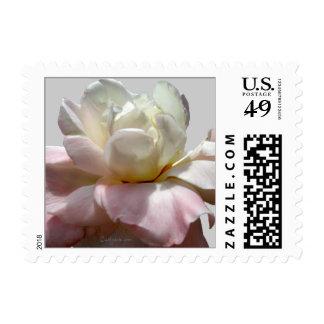 El boda blanco florece sellos color de rosa