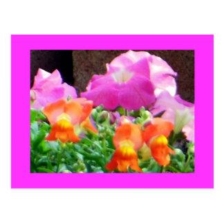 El bonito en púrpura y naranja florece las postale postal