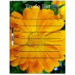 el bonito, flor amarilla fresca de la margarita, pizarras blancas