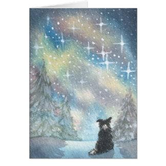 El border collie mira el cielo estrellado, TARJETA