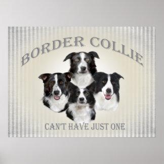 El border collie no puede tener apenas un poster