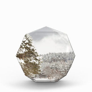 El bosque debajo de la nieve en el invierno