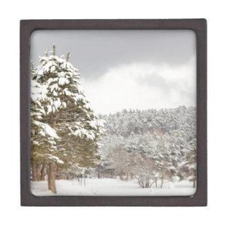 El bosque debajo de la nieve en el invierno cajas de recuerdo de calidad