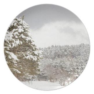 El bosque debajo de la nieve en el invierno plato de comida