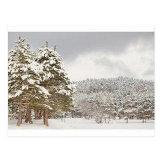 El bosque debajo de la nieve en el invierno postal