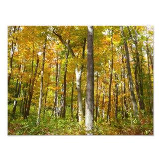 El bosque del amarillo sale de fotografía de la fotografía