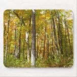 El bosque del amarillo sale del otoño Mousepad Tapetes De Raton