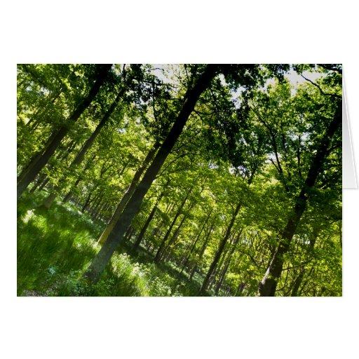 El bosque felicitacion
