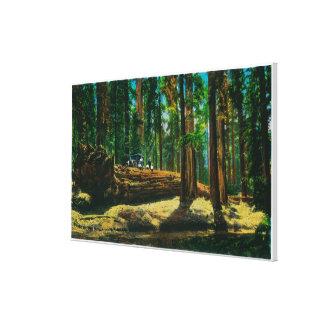 El bosque gigante de la clave auto, secoyas impresión de lienzo
