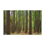 El bosque mágico lona estirada galerías