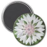 El botón del soltero blanco/rosado del imán -