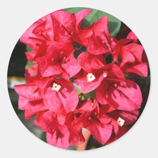 El Bougainvillea florece al pegatina