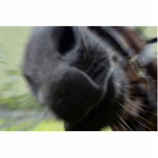 el bozal del caballo enfocó imagen equina esculturas fotograficas