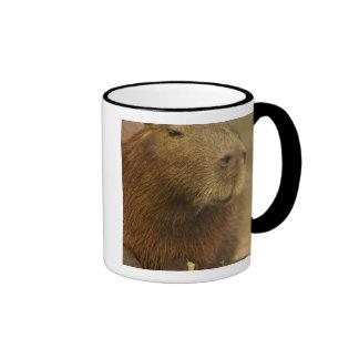 El Brasil, Pantanal, Matto Grosso. Capybara Taza De Dos Colores