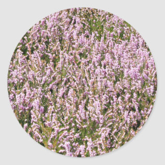 El brezo florece hermosa vista etiqueta redonda