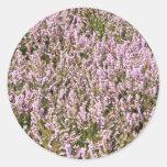 El brezo florece hermosa vista pegatinas redondas