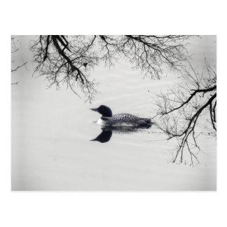 El bribón común nada en un lago septentrional en postal