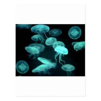 el brillar intensamente de los pescados de jalea tarjetas postales