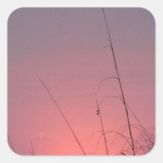 El brillar intensamente puesta del sol rosada y calcomanía cuadradas