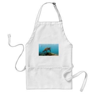 El bucear con la tortuga de mar en las islas de la delantal