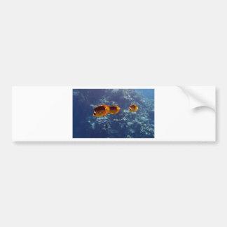 el bucear en el Mar Rojo Pegatina De Parachoque