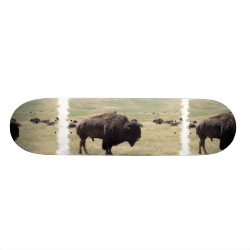 El búfalo caza el monopatín patin
