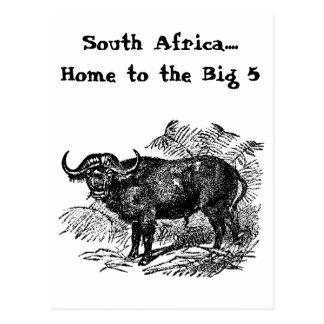 El búfalo Collectio Postales