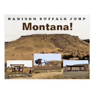 El búfalo de Madison salta Postales