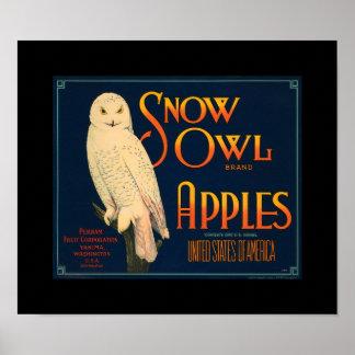 El búho Apple de la nieve del vintage del KRW da Póster