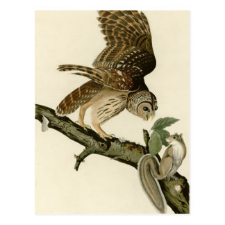 El búho barrado de Audubon Postal