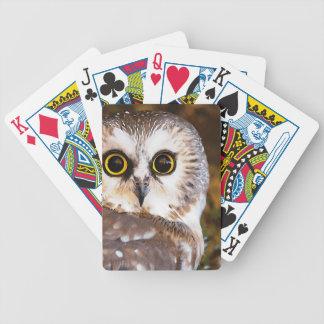 El búho observa la mirada del pájaro baraja cartas de poker
