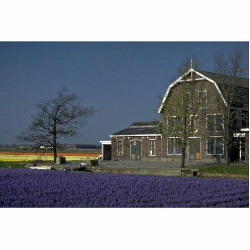 El bulbo coloca, Países Bajos en la Riviera de Cor Fotoescultura Vertical
