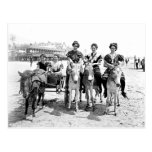 El burro de Atlantic City monta la postal
