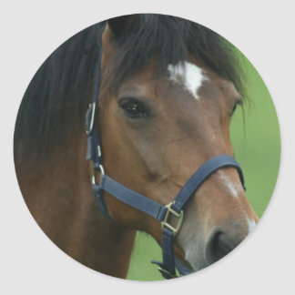 El caballo árabe representa a los pegatinas etiqueta redonda