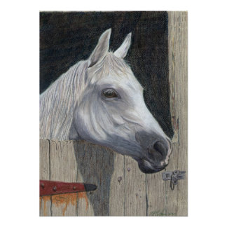 El caballo blanco poster