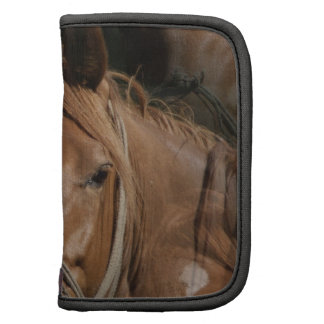 El caballo cría el folio de la cartera planificador