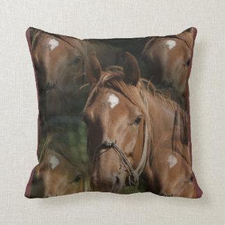 El caballo cría la almohada