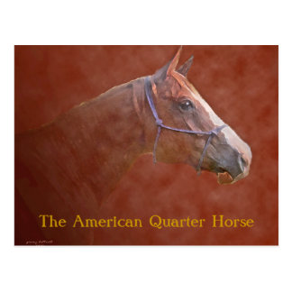 El caballo cuarto americano tarjeta postal