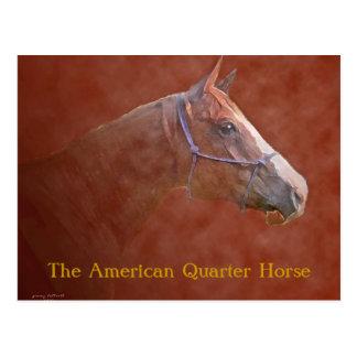 El caballo cuarto americano tarjetas postales