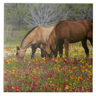 El caballo cuarto en el campo de wildflowers acerc azulejo